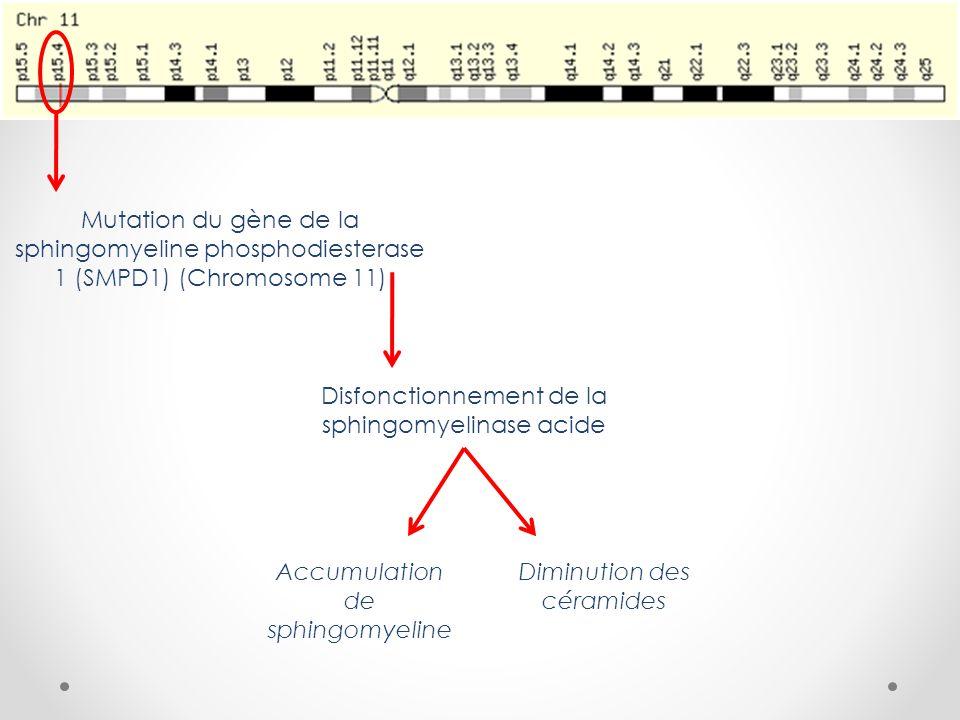 Disfonctionnement de la sphingomyelinase acide