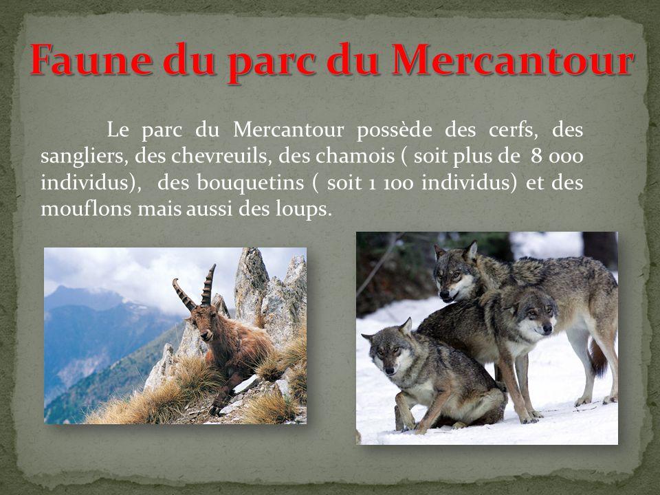 Faune du parc du Mercantour