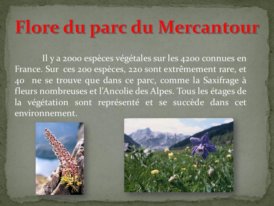 Flore du parc du Mercantour