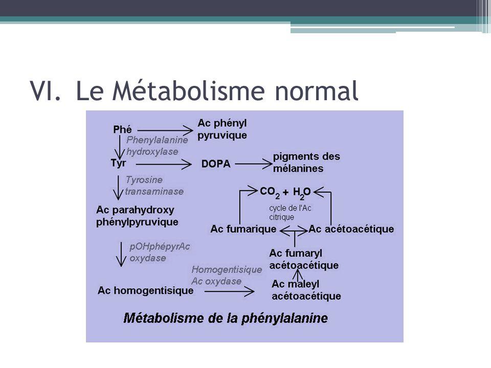 Le Métabolisme normal
