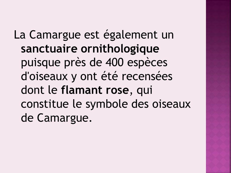 La Camargue est également un sanctuaire ornithologique puisque près de 400 espèces d oiseaux y ont été recensées dont le flamant rose, qui constitue le symbole des oiseaux de Camargue.