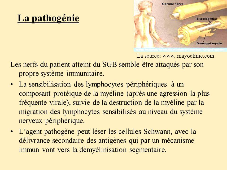 La pathogénie La source: www. mayoclinic.com. Les nerfs du patient atteint du SGB semble être attaqués par son propre système immunitaire.