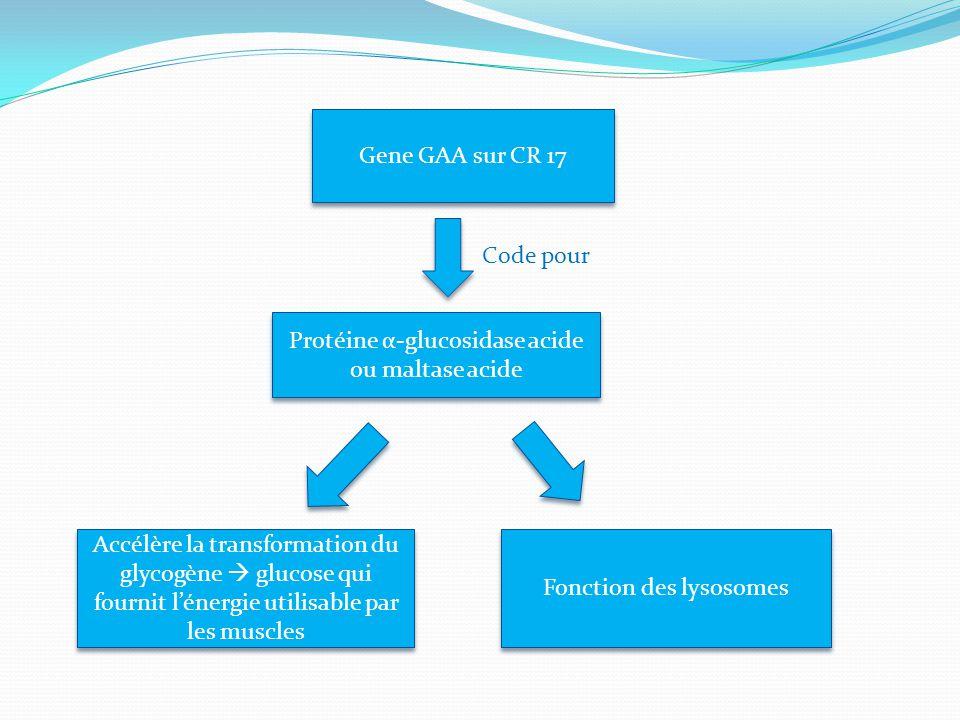 Protéine α-glucosidase acide ou maltase acide