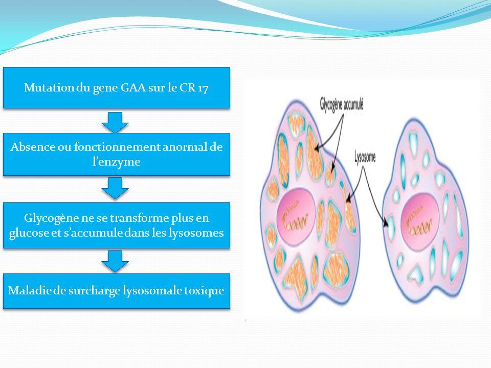Mutation du gene GAA sur le CR 17