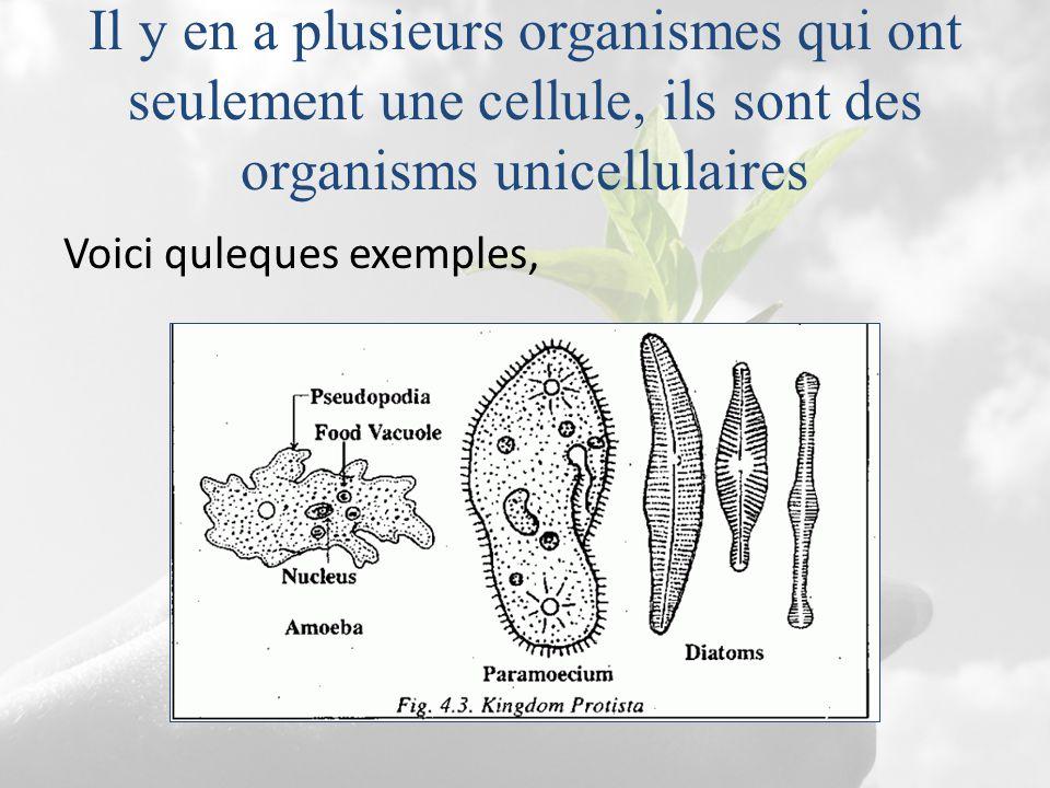 Il y en a plusieurs organismes qui ont seulement une cellule, ils sont des organisms unicellulaires