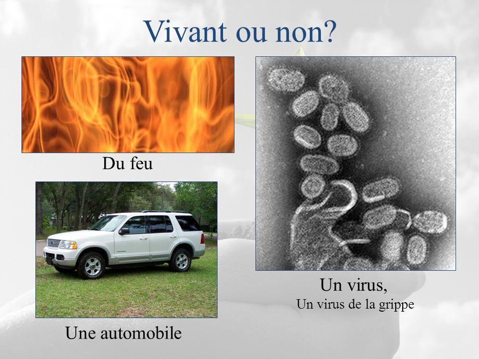 Vivant ou non Du feu Un virus, Un virus de la grippe Une automobile