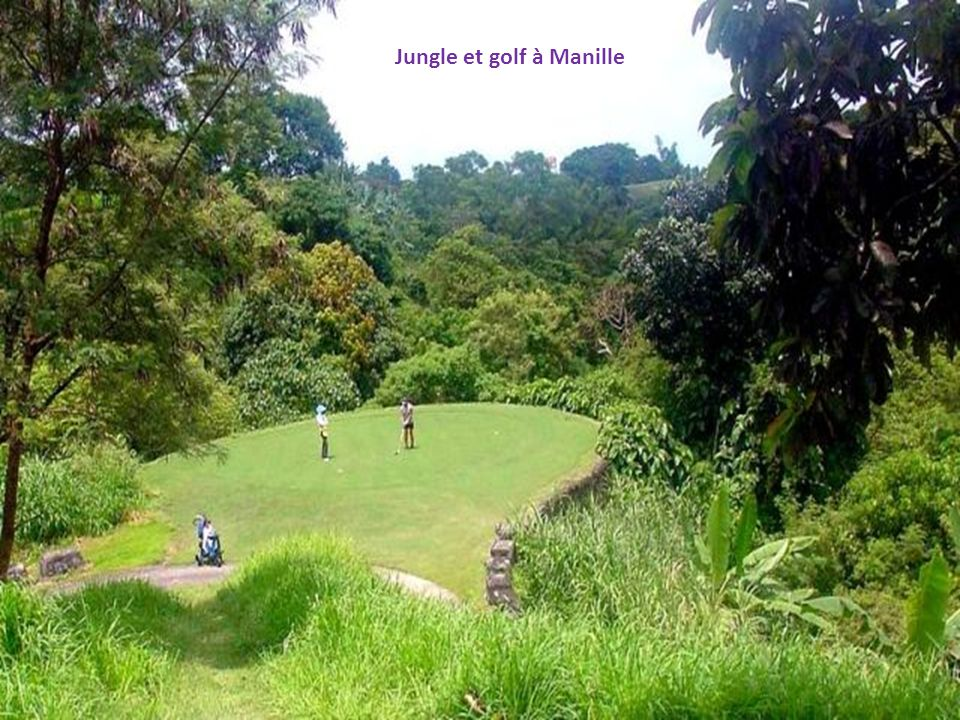 Jungle et golf à Manille