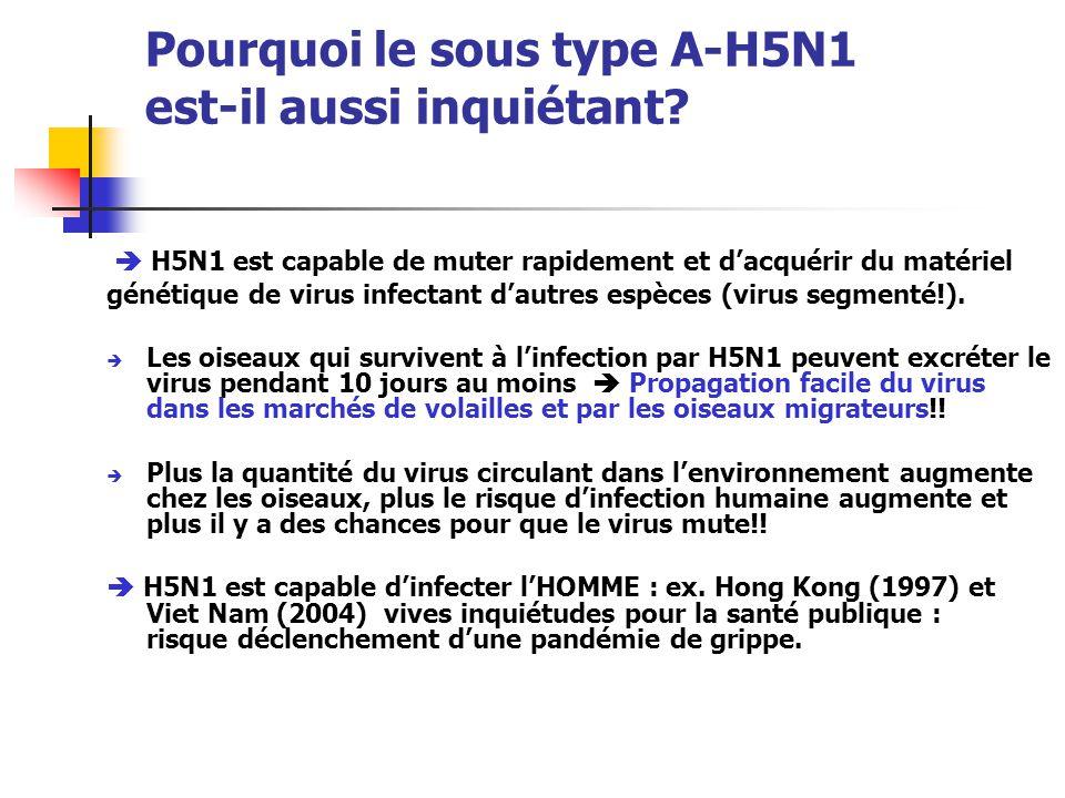 Pourquoi le sous type A-H5N1 est-il aussi inquiétant