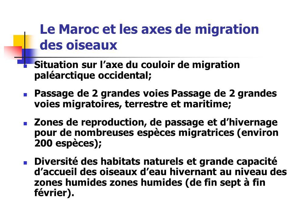 Le Maroc et les axes de migration des oiseaux