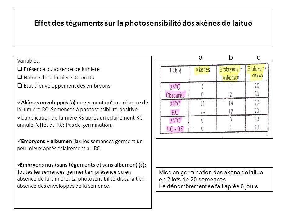 Effet des téguments sur la photosensibilité des akènes de laitue
