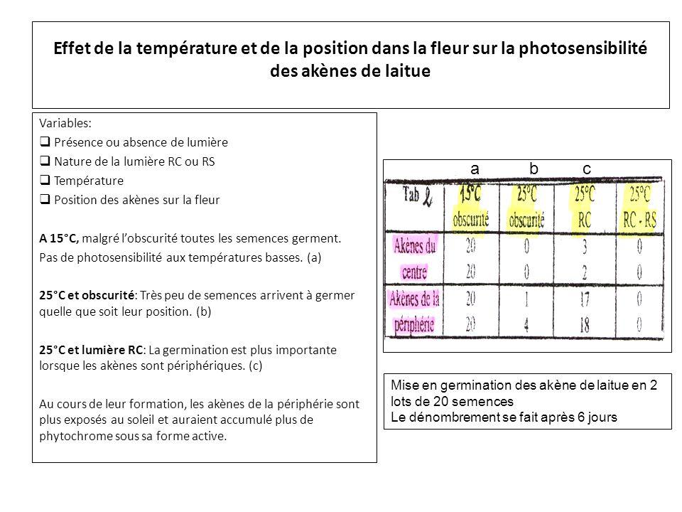 Effet de la température et de la position dans la fleur sur la photosensibilité des akènes de laitue