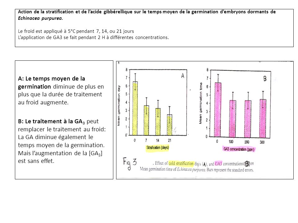 Action de la stratification et de l'acide gibbérellique sur le temps moyen de la germination d'embryons dormants de Echinacea purpurea. Le froid est appliqué à 5°C pendant 7, 14, ou 21 jours L'application de GA3 se fait pendant 2 H à différentes concentrations.