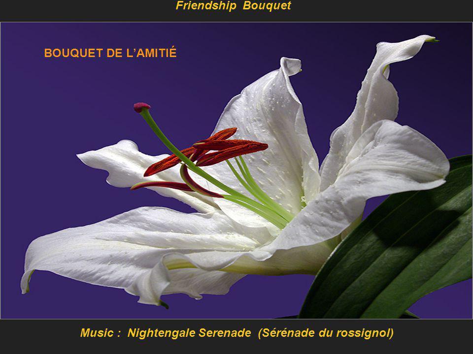 Music : Nightengale Serenade (Sérénade du rossignol)