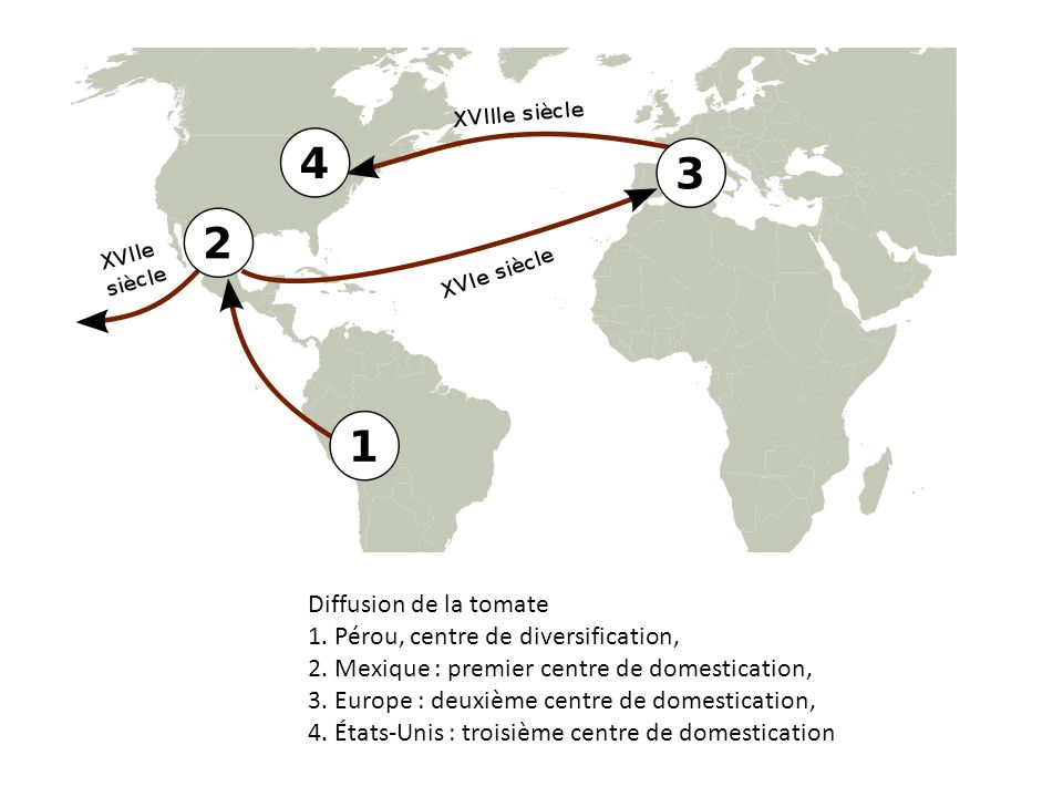 Diffusion de la tomate 1. Pérou, centre de diversification, 2. Mexique : premier centre de domestication,