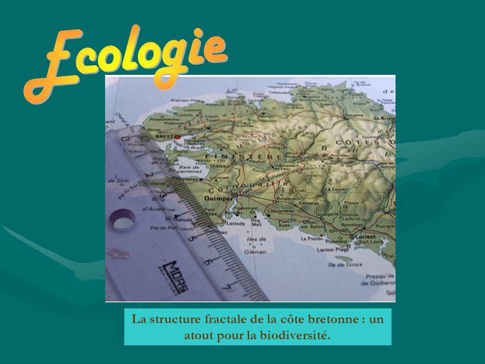 Ecologie La structure fractale de la côte bretonne : un atout pour la biodiversité.