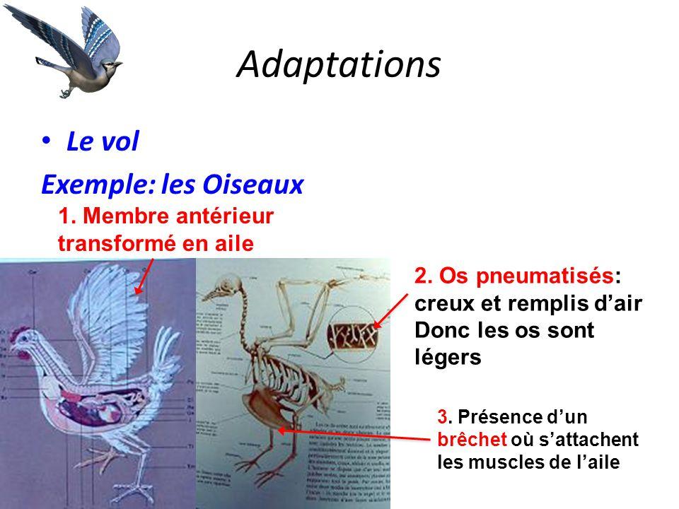 Adaptations Le vol Exemple: les Oiseaux