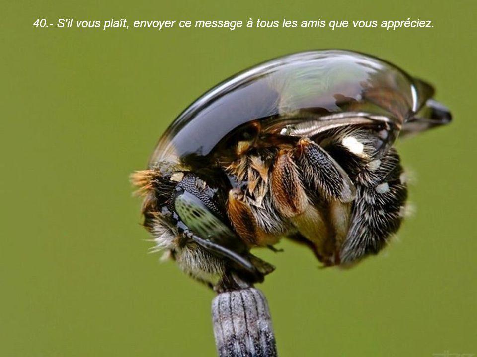 40.- S il vous plaît, envoyer ce message à tous les amis que vous appréciez.