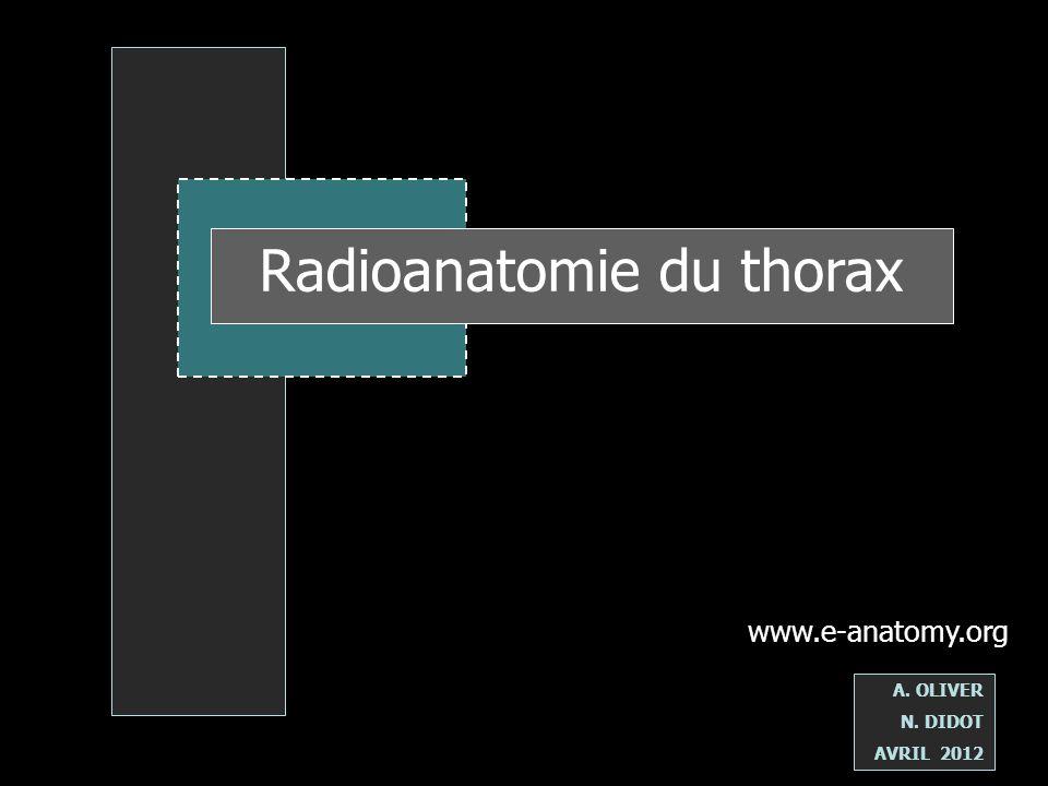 Radioanatomie du thorax