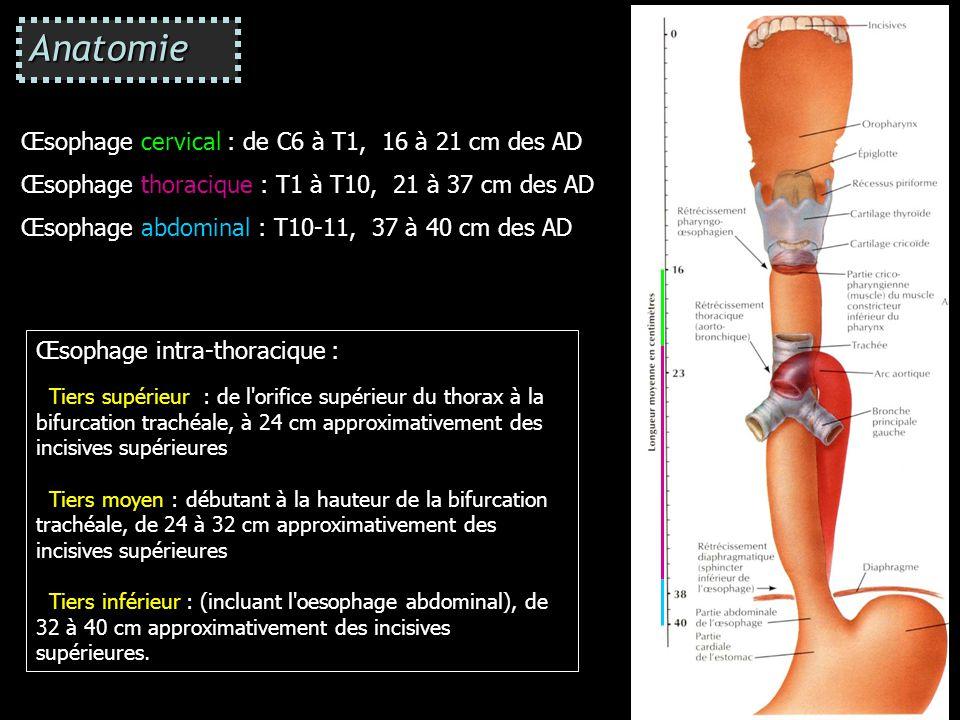 Anatomie Œsophage cervical : de C6 à T1, 16 à 21 cm des AD