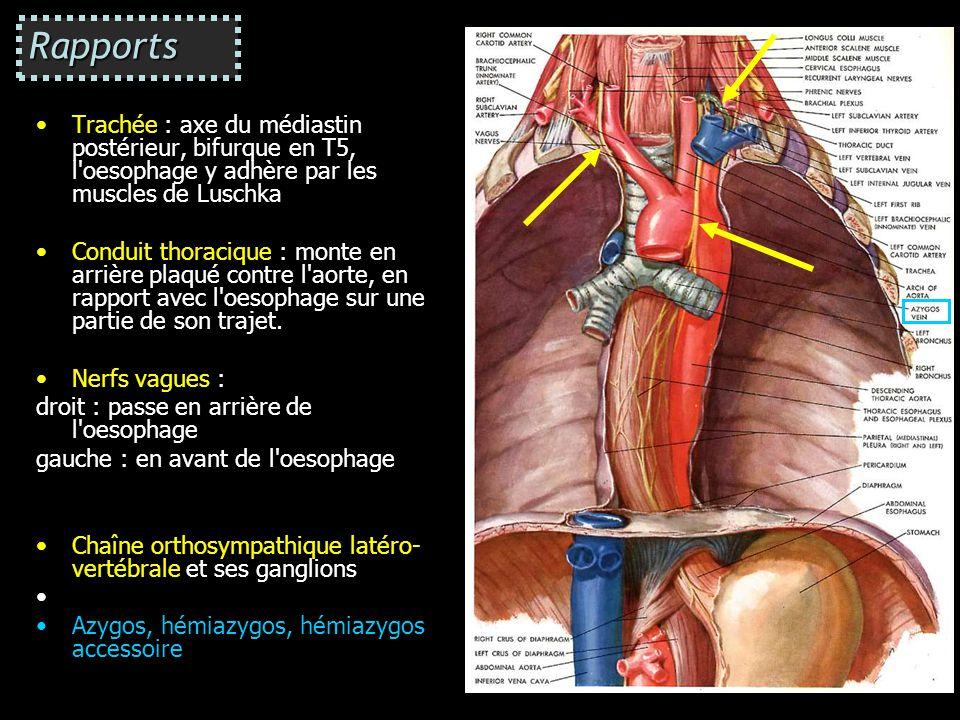 Rapports Trachée : axe du médiastin postérieur, bifurque en T5, l oesophage y adhère par les muscles de Luschka.