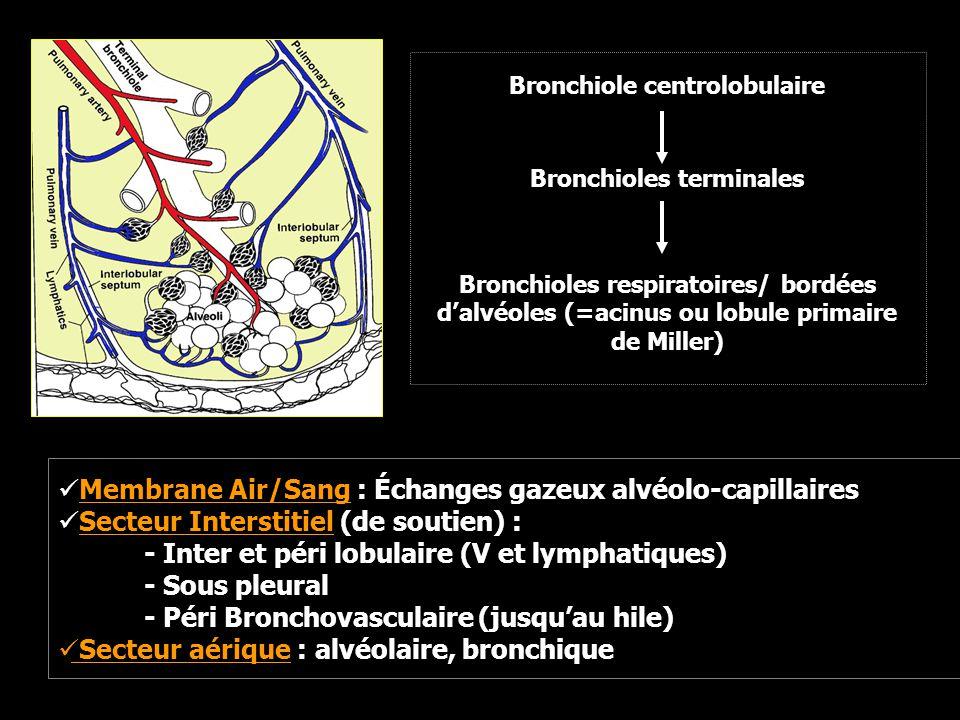 Membrane Air/Sang : Échanges gazeux alvéolo-capillaires