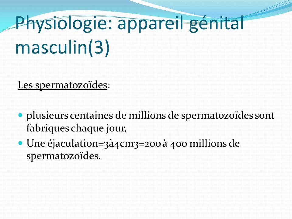 Physiologie: appareil génital masculin(3)
