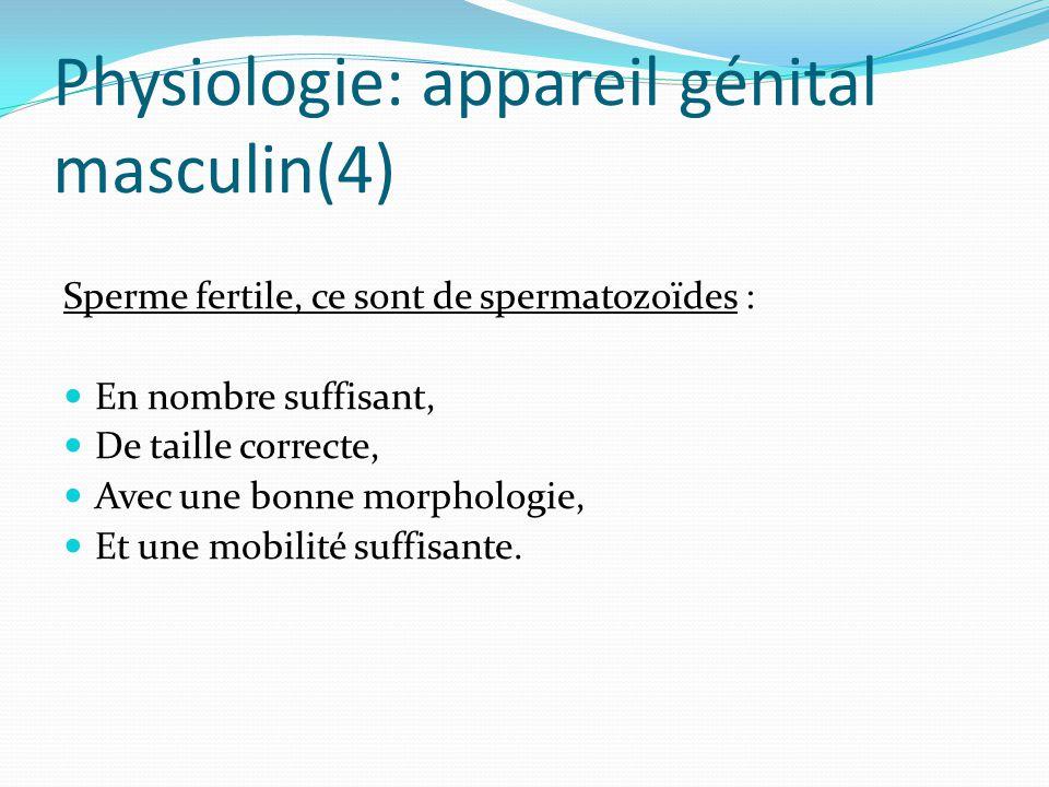 Physiologie: appareil génital masculin(4)