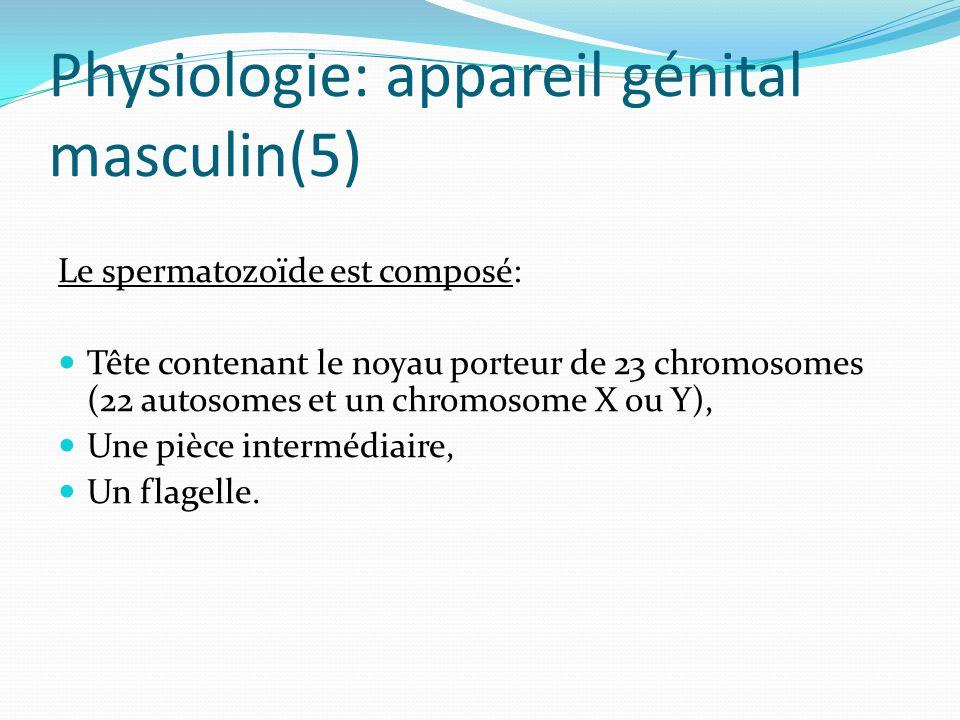 Physiologie: appareil génital masculin(5)
