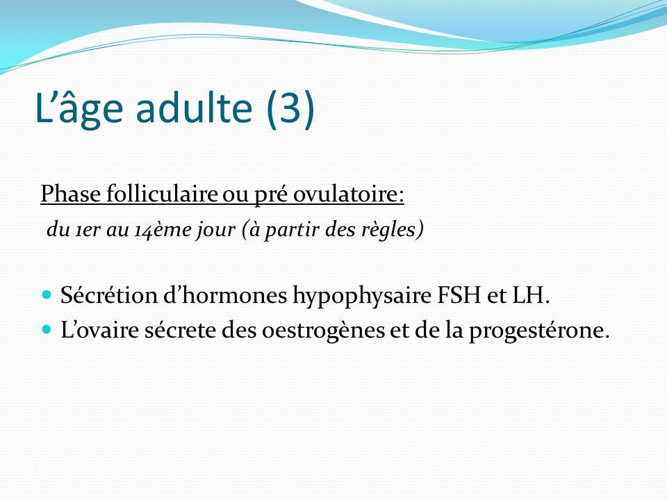L'âge adulte (3) Phase folliculaire ou pré ovulatoire: