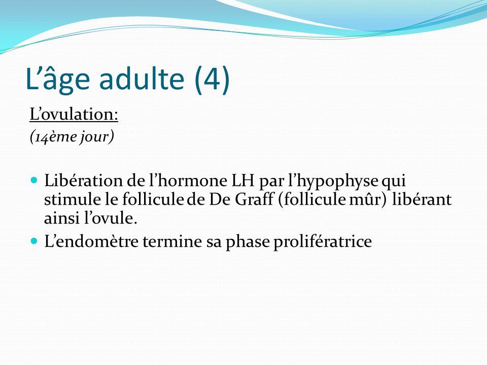 L'âge adulte (4) L'ovulation: