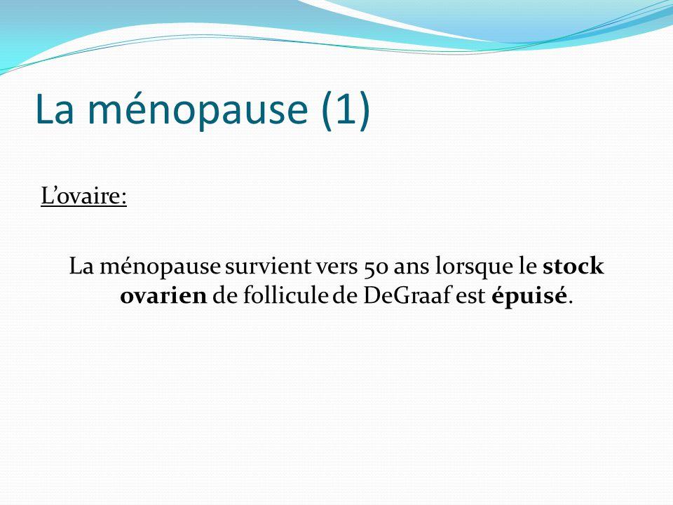 La ménopause (1) L'ovaire: La ménopause survient vers 50 ans lorsque le stock ovarien de follicule de DeGraaf est épuisé.