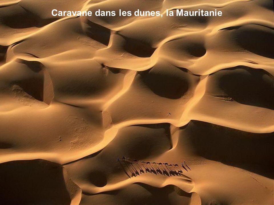 Caravane dans les dunes, la Mauritanie