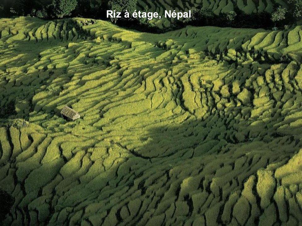 Riz à étage, Népal
