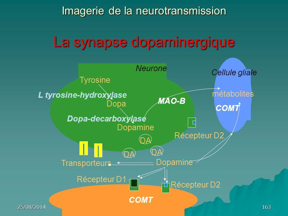 Imagerie de la neurotransmission La synapse dopaminergique
