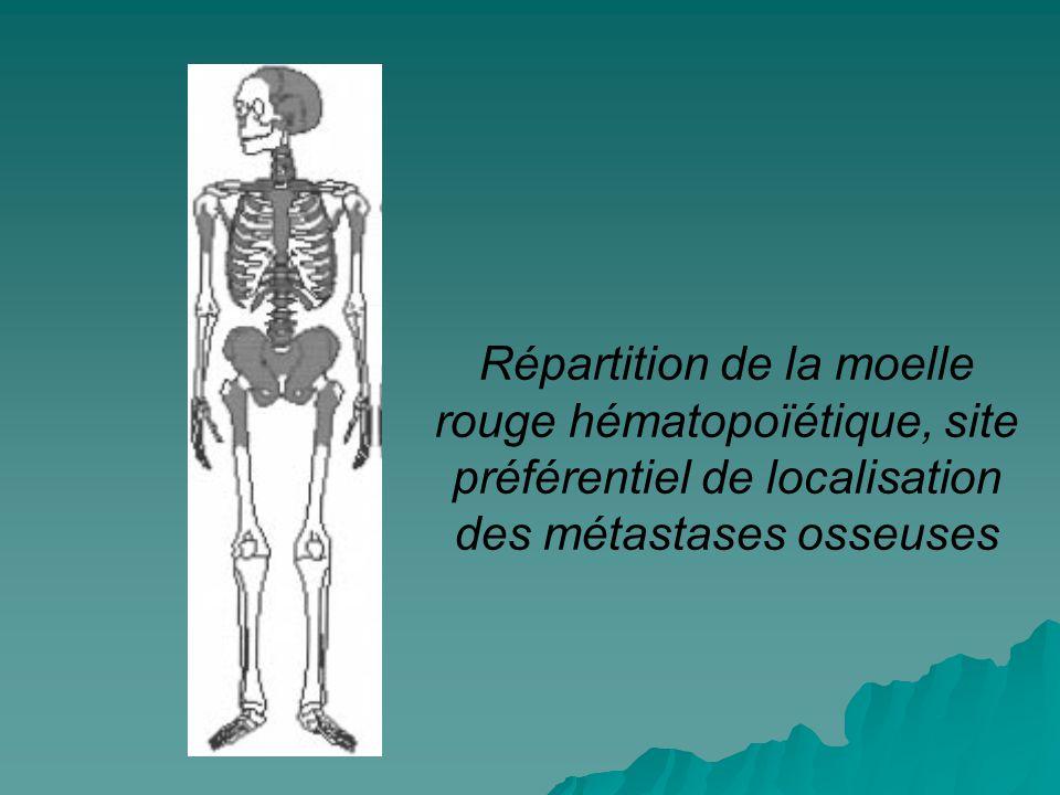Répartition de la moelle rouge hématopoïétique, site préférentiel de localisation des métastases osseuses