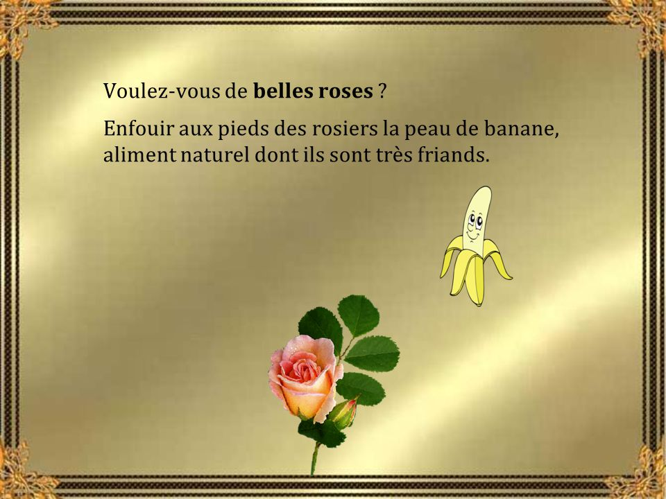 Voulez-vous de belles roses