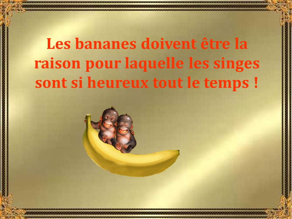 Les bananes doivent être la raison pour laquelle les singes sont si heureux tout le temps !