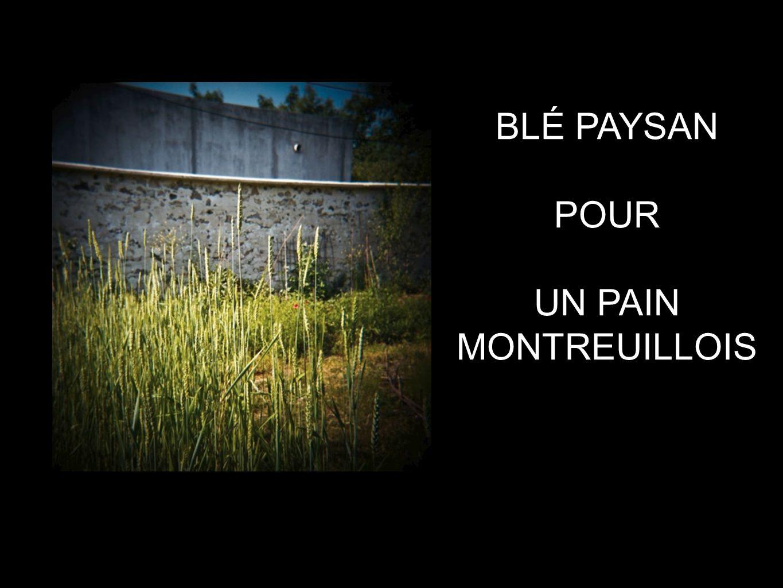 BLÉ PAYSAN POUR UN PAIN MONTREUILLOIS