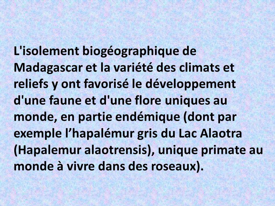 L isolement biogéographique de Madagascar et la variété des climats et reliefs y ont favorisé le développement d une faune et d une flore uniques au monde, en partie endémique (dont par exemple l'hapalémur gris du Lac Alaotra (Hapalemur alaotrensis), unique primate au monde à vivre dans des roseaux).