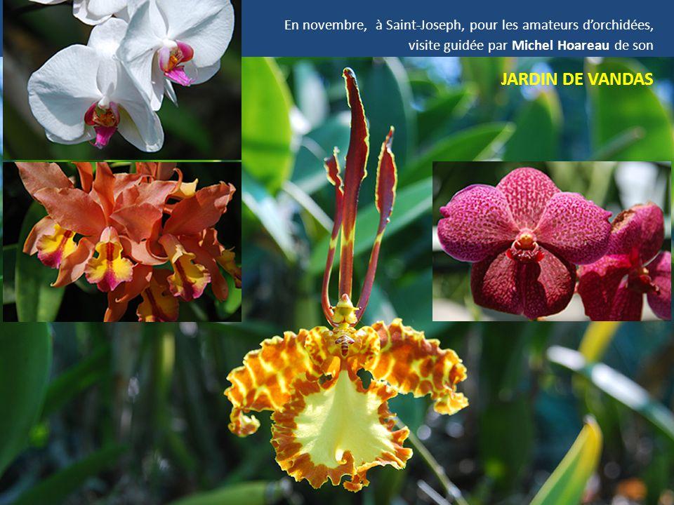 En novembre, à Saint-Joseph, pour les amateurs d'orchidées,