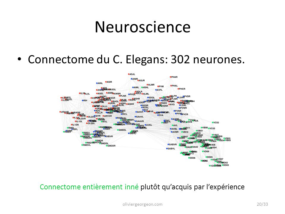 Neuroscience Connectome du C. Elegans: 302 neurones.