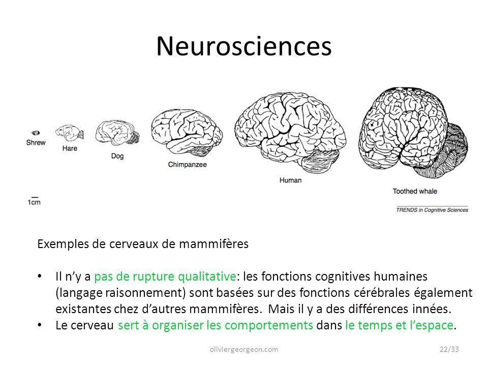 Neurosciences Exemples de cerveaux de mammifères
