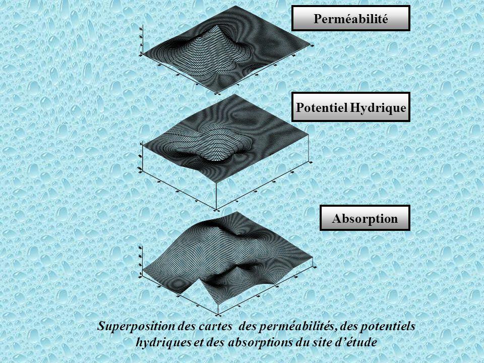 Superposition des cartes des perméabilités, des potentiels hydriques et des absorptions du site d'étude
