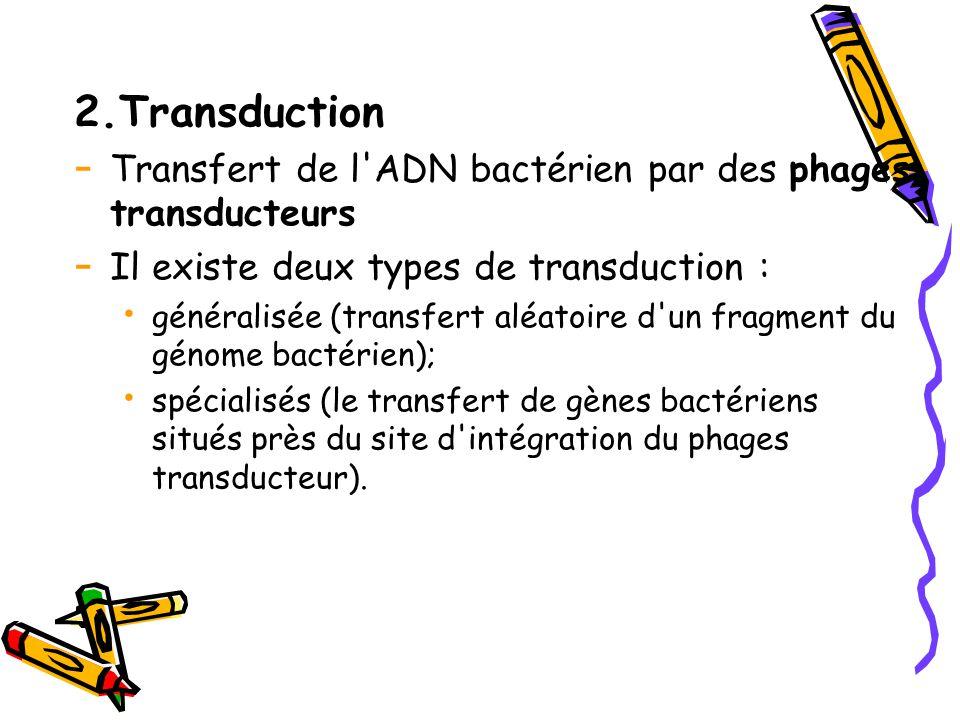 2.Transduction Transfert de l ADN bactérien par des phages transducteurs. Il existe deux types de transduction :