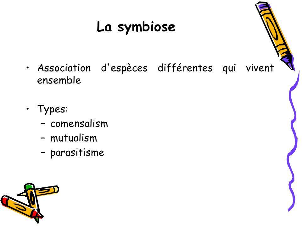 La symbiose Association d espèces différentes qui vivent ensemble