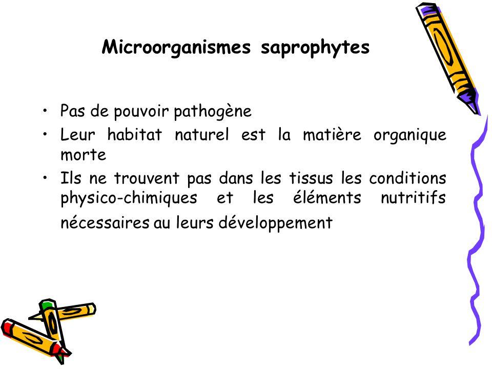 Microorganismes saprophytes