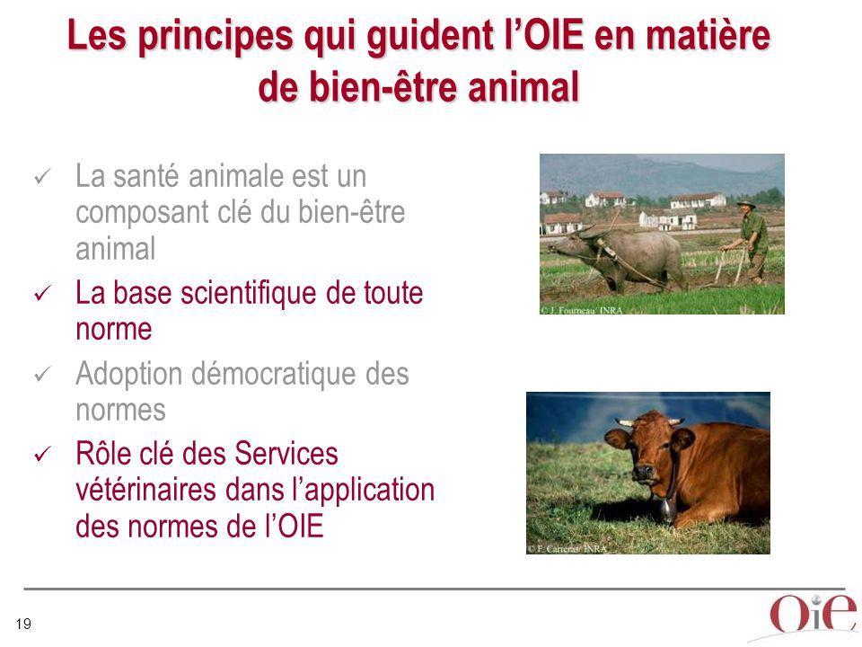 Les principes qui guident l'OIE en matière de bien-être animal