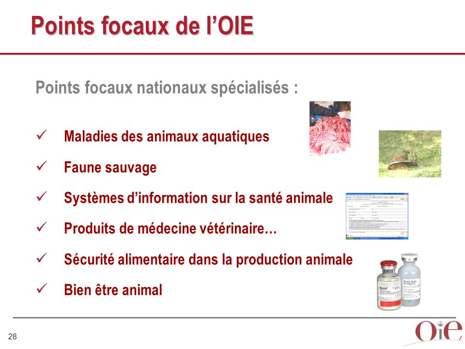 Points focaux de l'OIE Points focaux nationaux spécialisés :