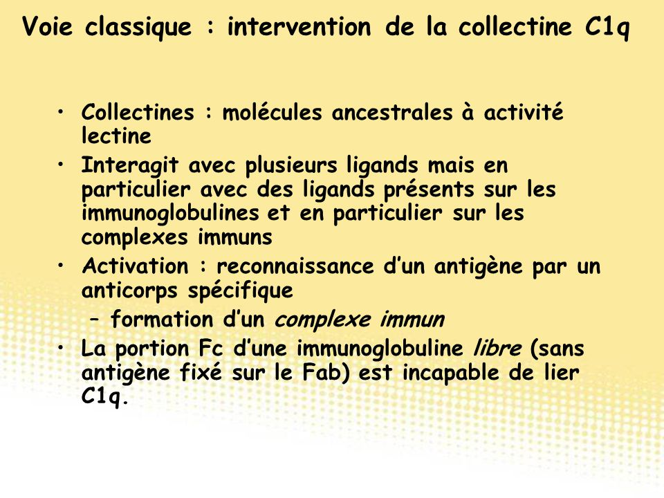 Voie classique : intervention de la collectine C1q