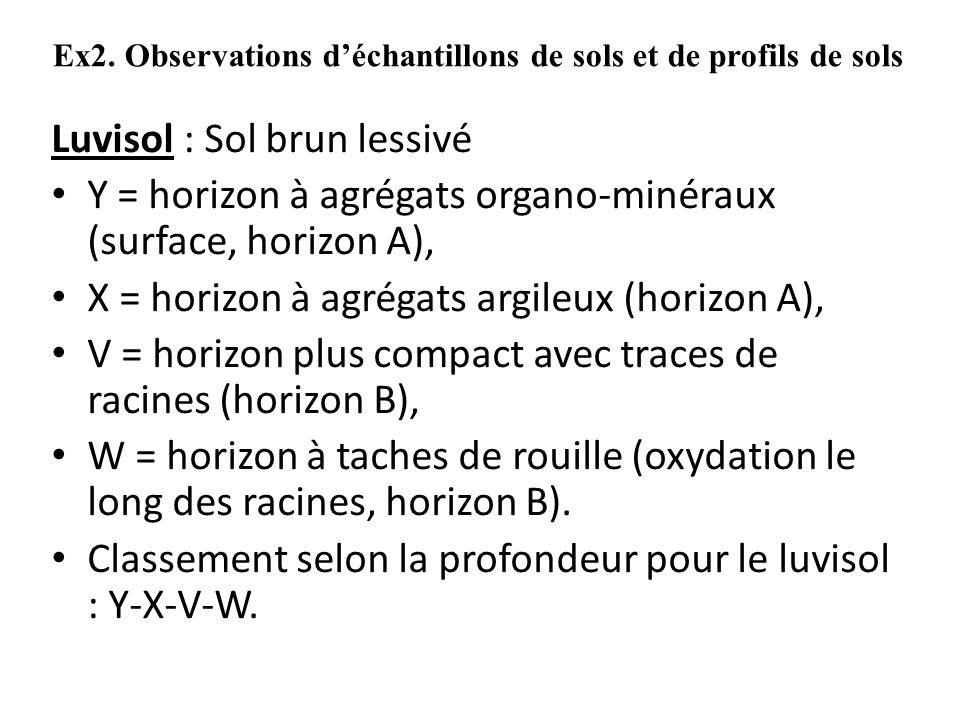 Ex2. Observations d'échantillons de sols et de profils de sols